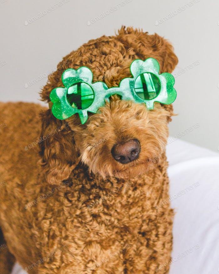 St. Patrick's Day Doggy Glasses