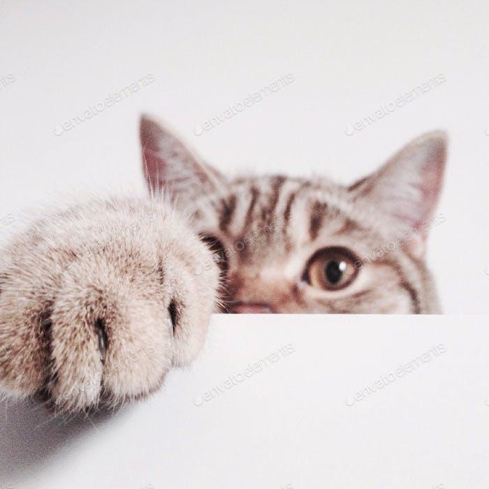 la cara del gato se esconde