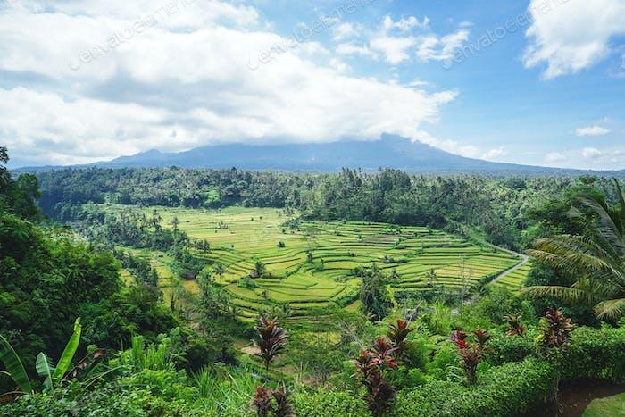 Majestic rice terraces of Bali, Indonesia
