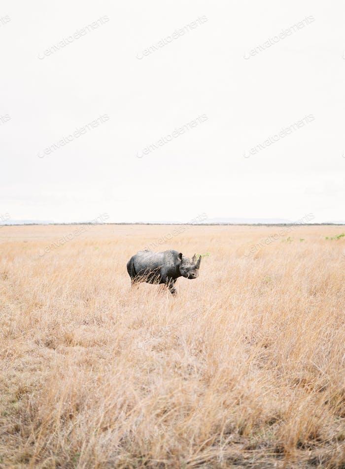 Rhino  Travel  Africa  Animal Nature Wild life
