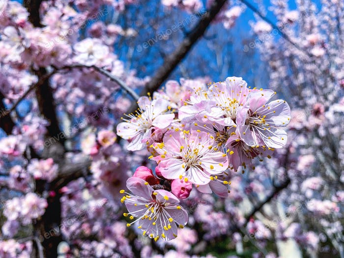 Flowers blossom in spring