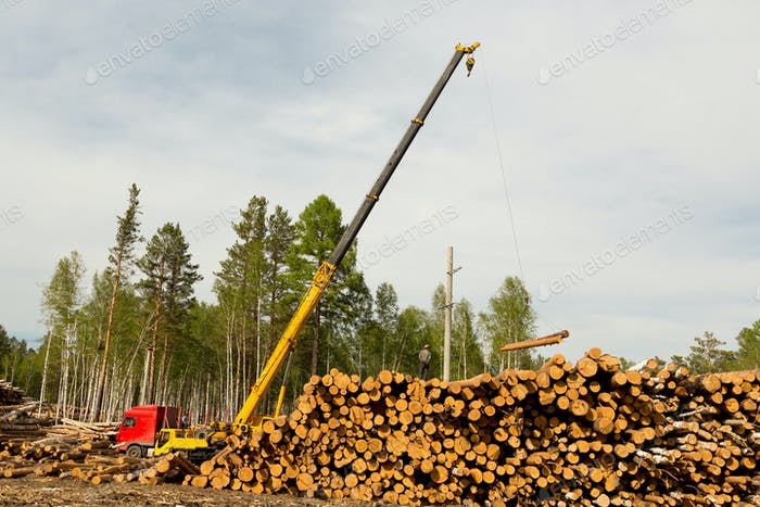 timber loading