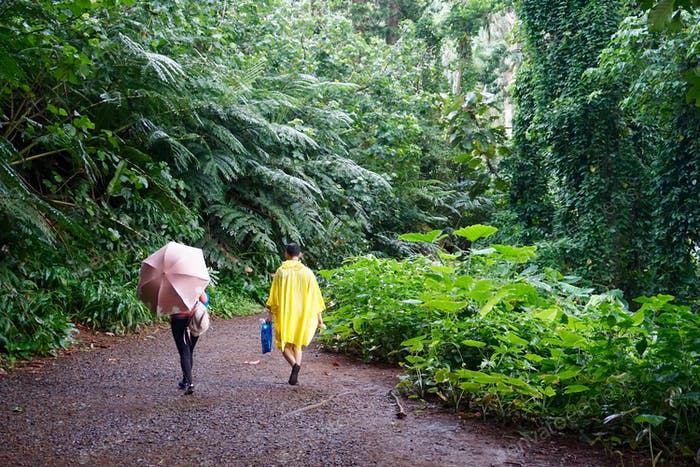 (Nominated) Hikers in rainforest