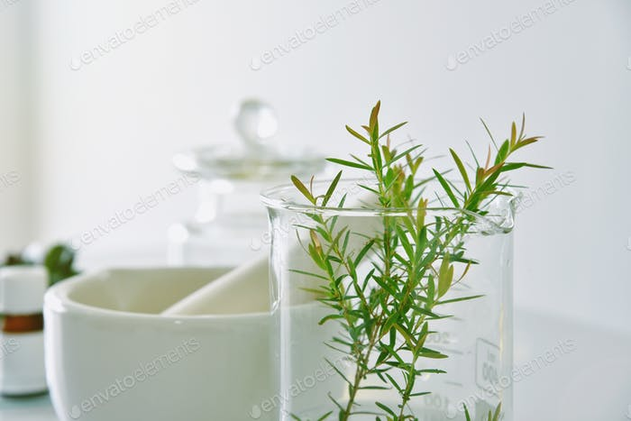 Natural organic botany and scientific glassware