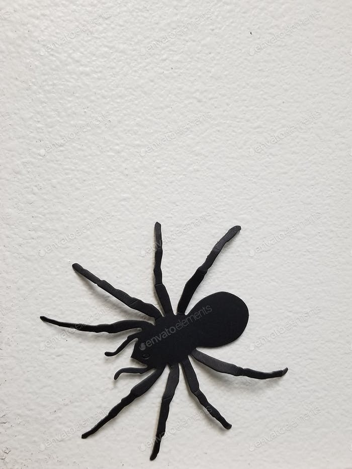 Creepy Crawly Giant Spider on the Wall!