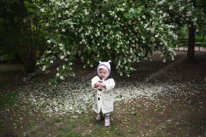child in raincoat studies jasmine flower against background of flowering shrub.