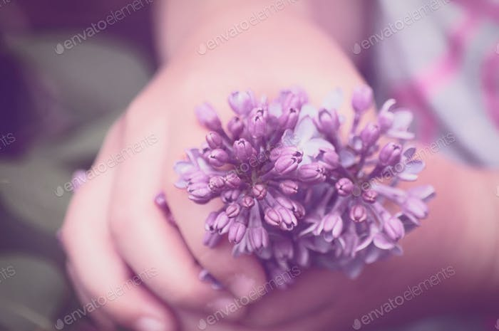 Soft Color of a Child Grasping a Purple Lilac Blossom Getting Ready to Smell it
