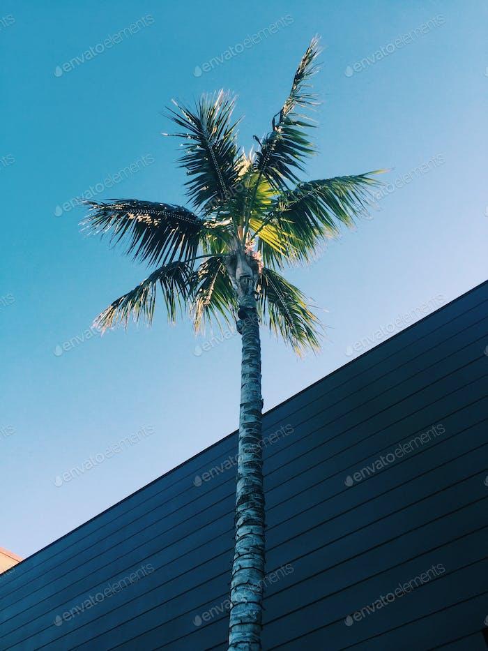 Lone Palm Tree. 🌴