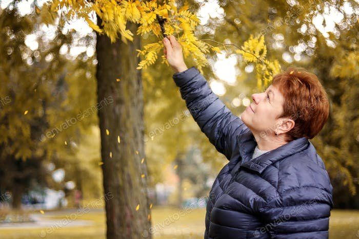 Adult senior beautiful 60 years old woman enjoying golden autumn in the park touching the leaves on