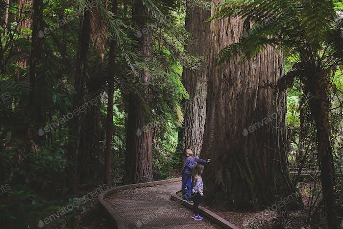 Kinder im Redwood Wald