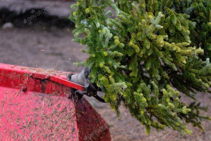 Nahaufnahme einer Maschine, die Tannennadeln von einem frisch geschnittenen Weihnachtsbaum schüttelt