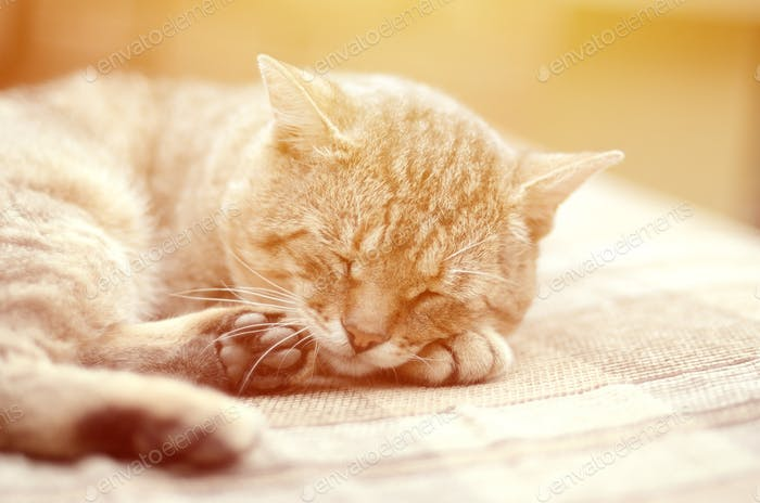 Tabby cat sleeps on soft couch outdoors
