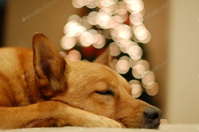 I'll wait for Santa right here...