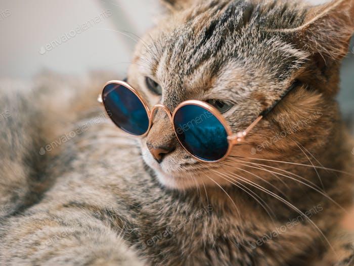 Mentiras serias de gato jengibre. El gato lleva gafas de sol.