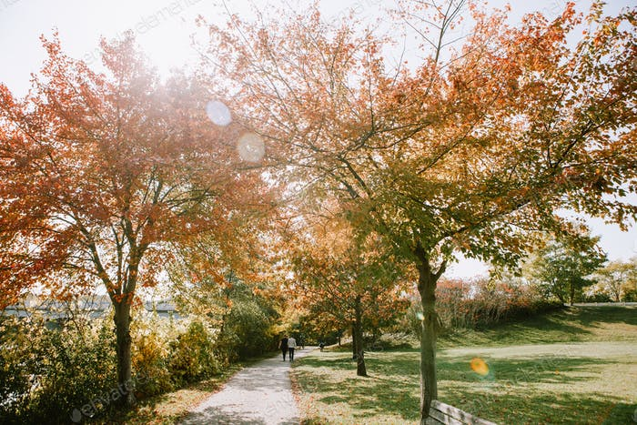 Sunny fall/autumn day in the park with lens flare and orange foliage trees