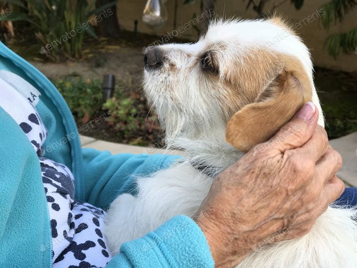 A senior woman pets a rescue terrier dog  and is comforted by his companionship.