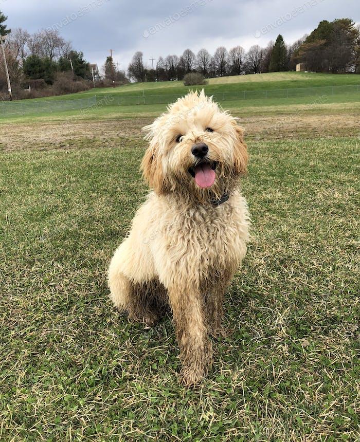 Little Bit Muddy Buddy