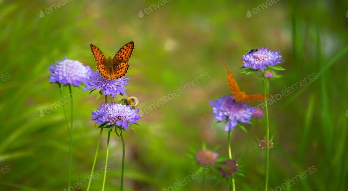 Butterfly on the flower in the meadow