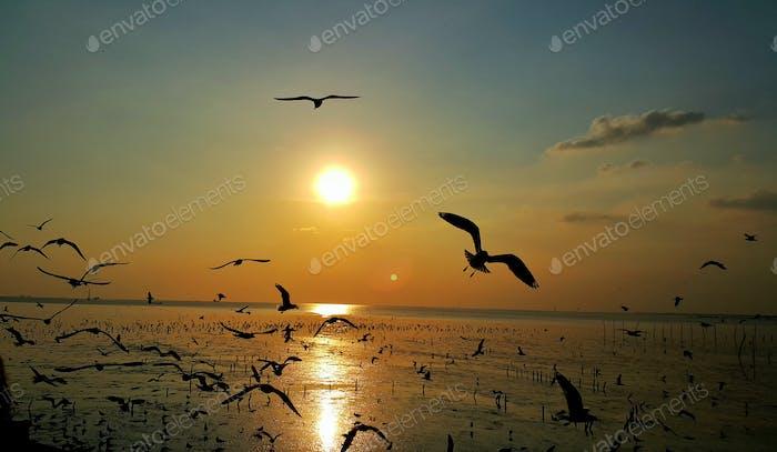 Silhouette of seagulls bird flying in the sunset sky golden hour