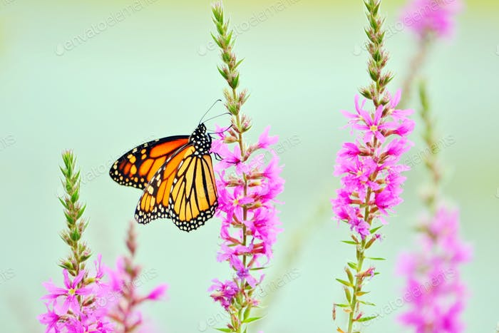 Monarch butterfly! #flowersphotography #flowersphoto #flowerstalking #flowerday #flowersday