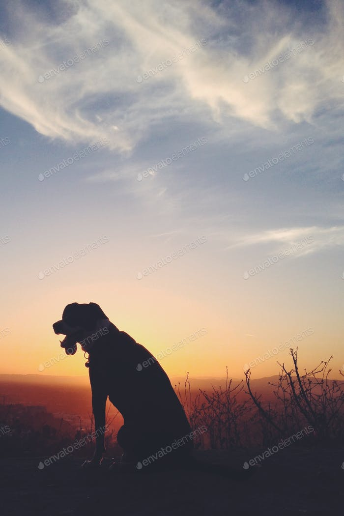 Dog silhouetted watching the sunset on a hike