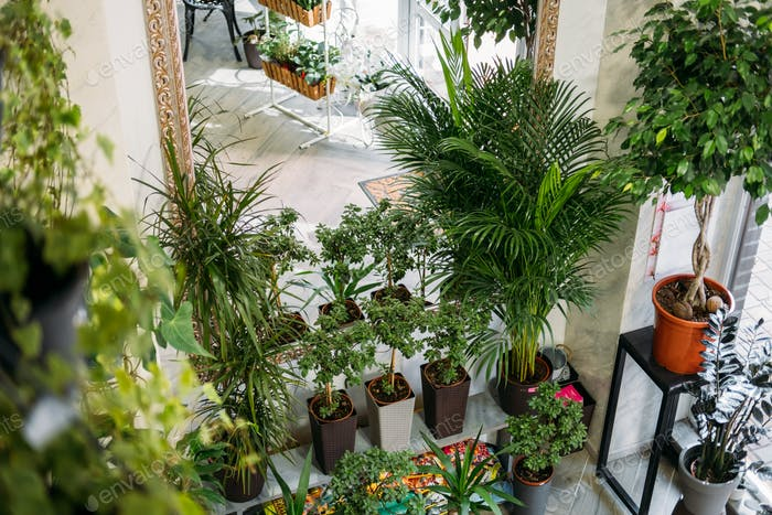Garden room, Biophilia trend, Living with Nature, biophilic interior design