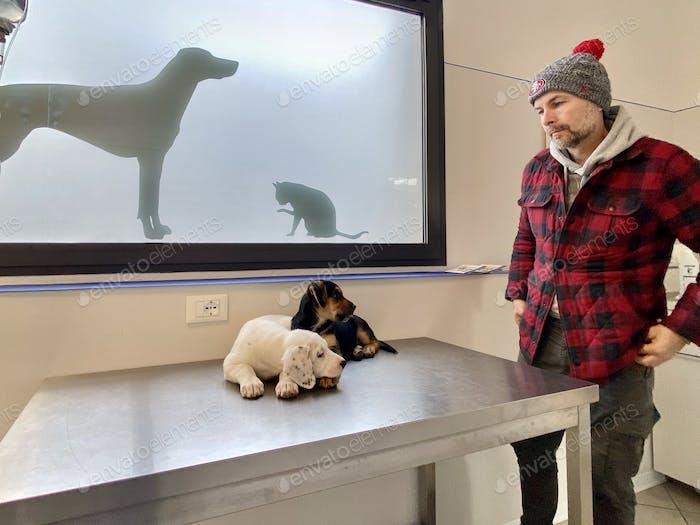 At the veterinarian