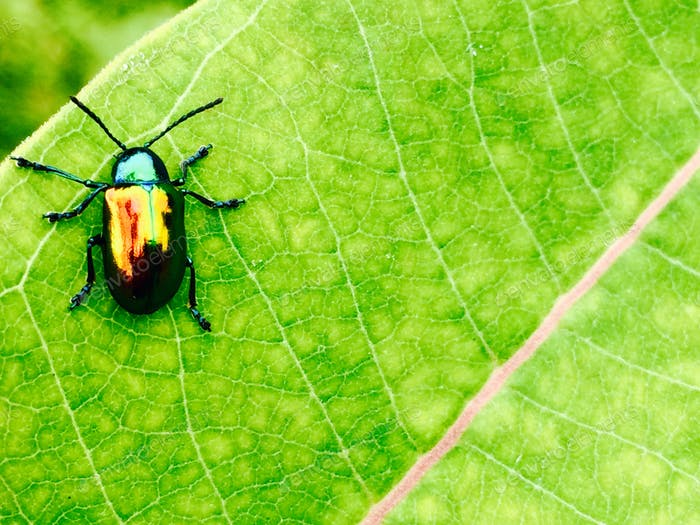 The bug on the green leaf