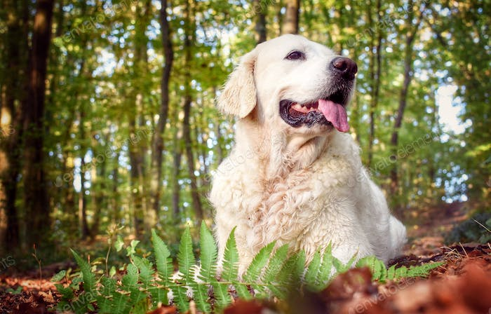💓NOMINATED💓 Doggie in the forest