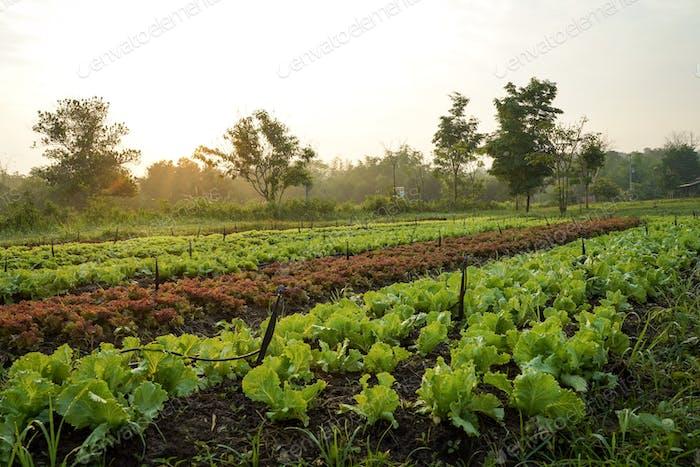 Fresh organic farm