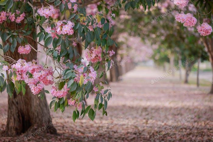 Flor de trompeta rosa en el jardín