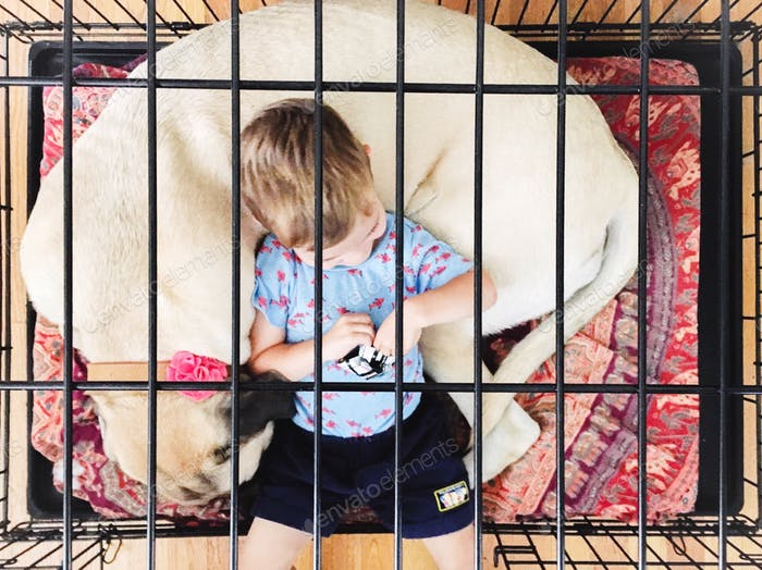 Looking down through bars of dog crate at English mastiff puppy nestled around young boy.