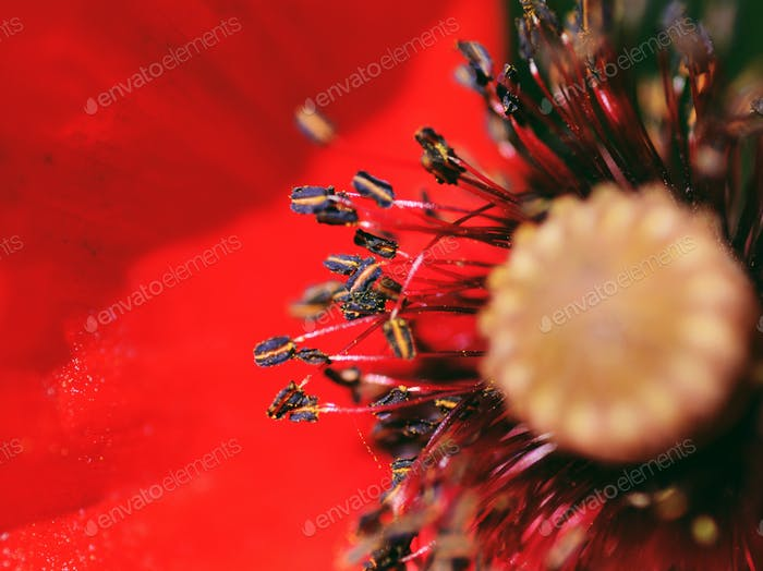 Poppy seeds zoomed in