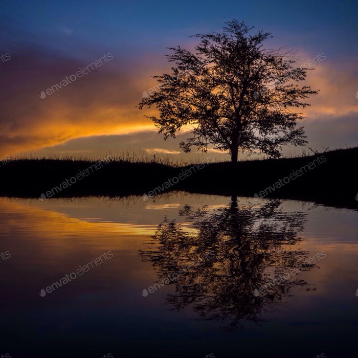 Twilight sunset tree