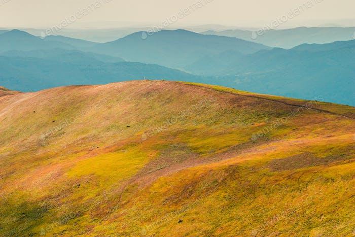 Yellow ridge