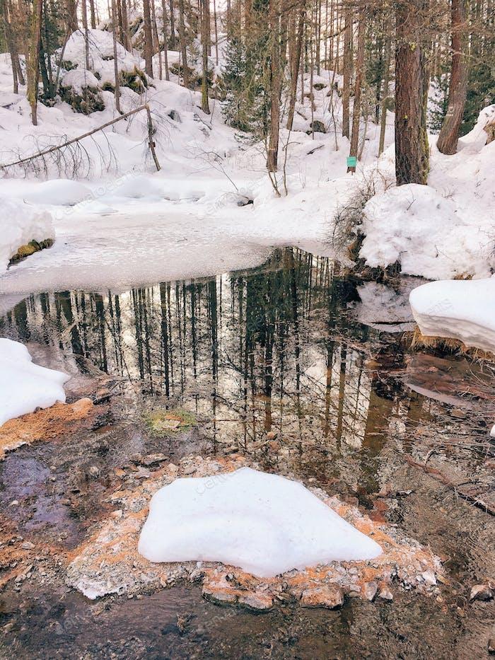 Eisiger Wald.