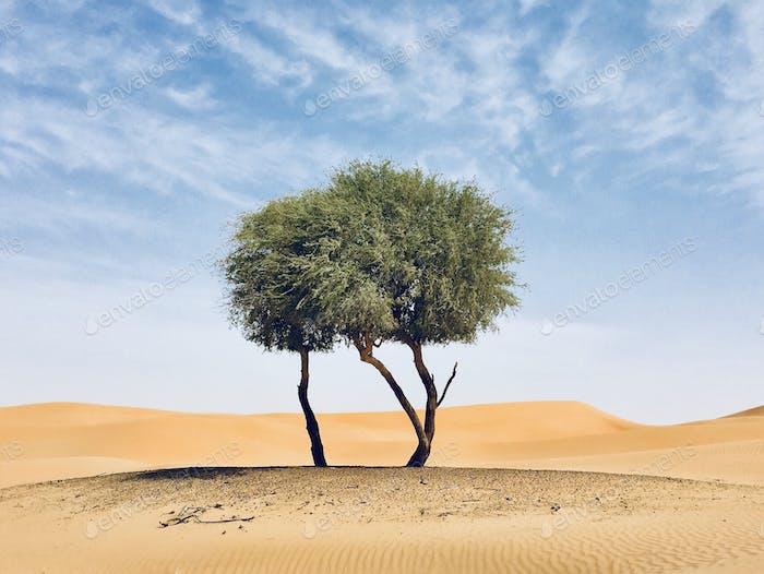 Vive en el desierto