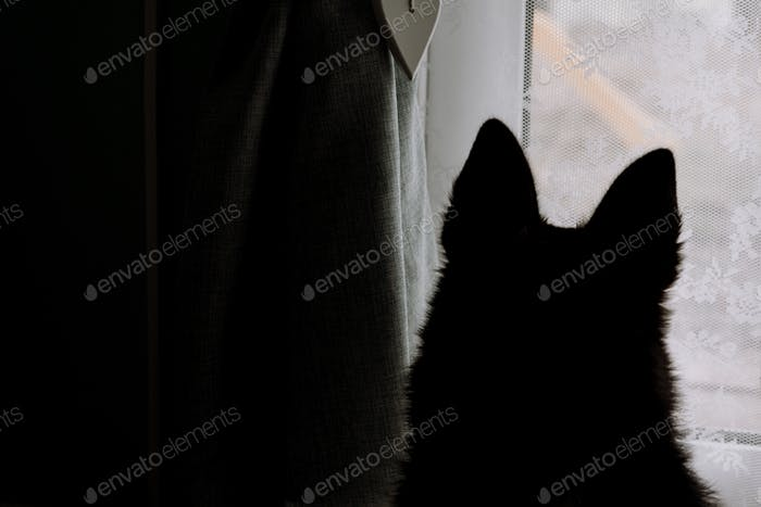 Silhouette of dogs ears