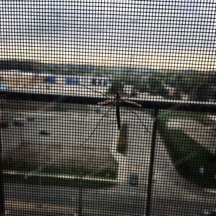# mosquito on window net #