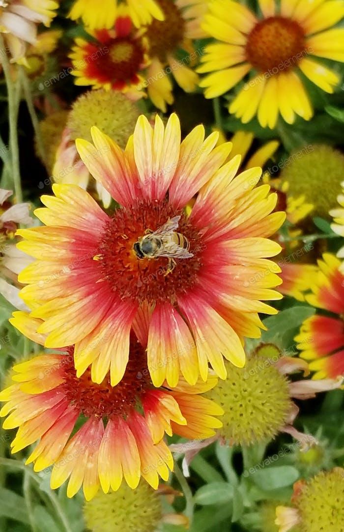 Honey Bee! Sweet Flowers!  NOMINATED!!