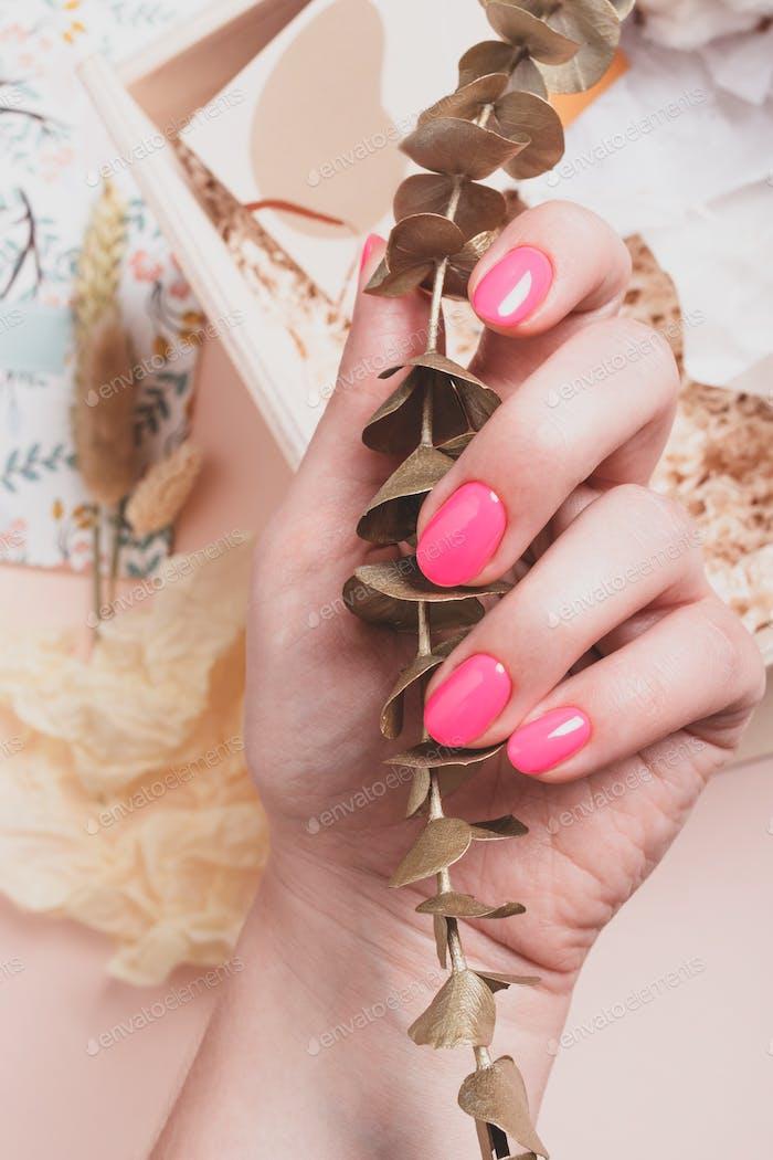 Weibliche Hand mit leuchtend rosa Maniküre hält einen Zweig des goldenen Eukalyptus