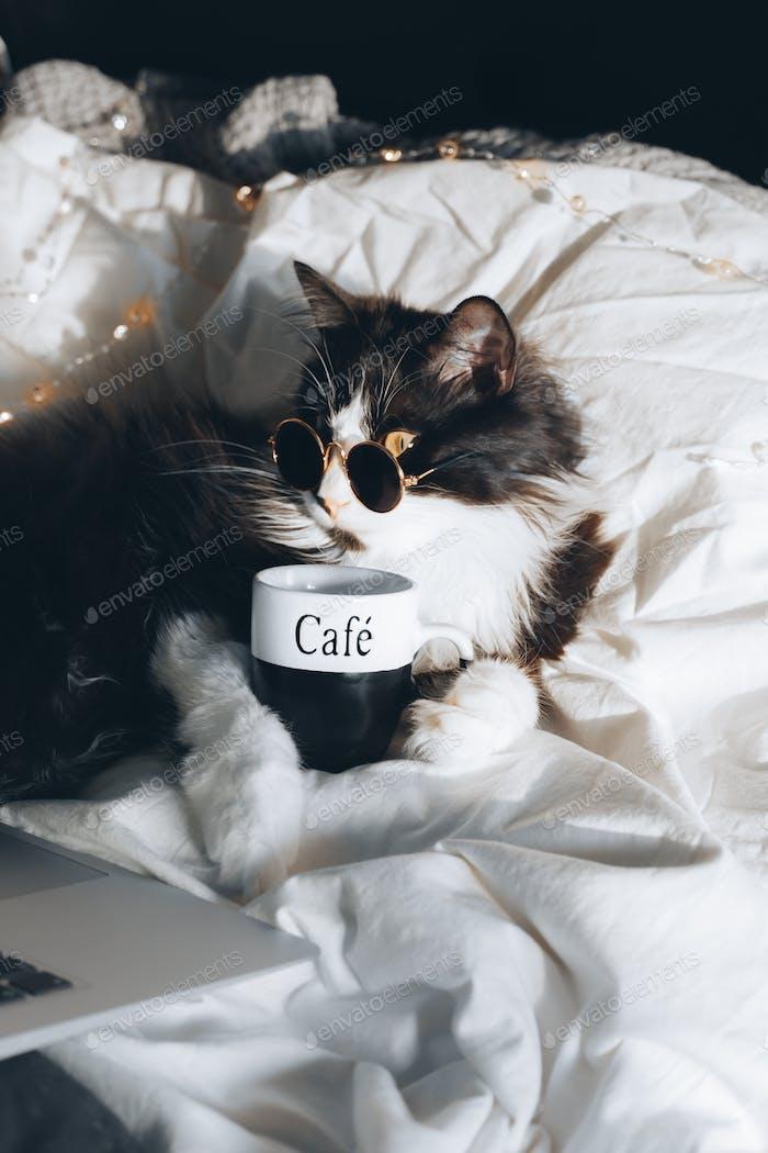 Gato actuando como humano Gato negro tomando café en la cama usando gafas viendo películas en la computadora