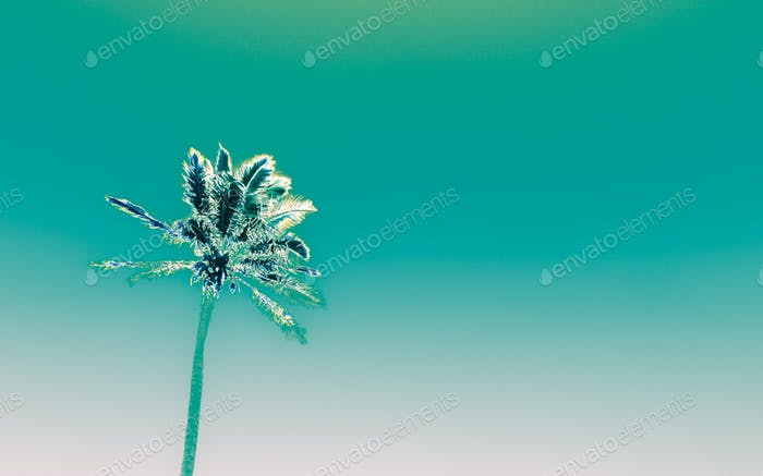 funky palm on soft turquoise