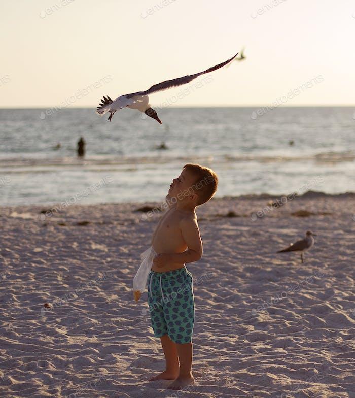 Vögel greifen am Strand an