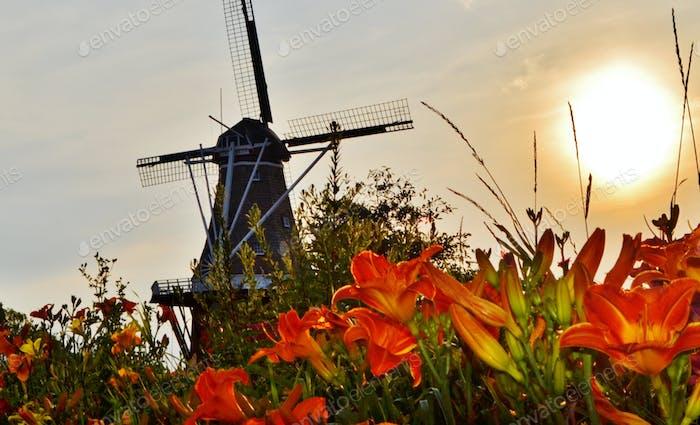 Windmill Island, Holland Michigan