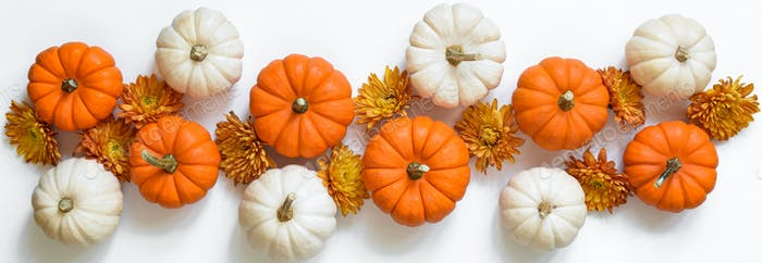 White background banner with white and orange mini pumpkins and fall chrysanthemums