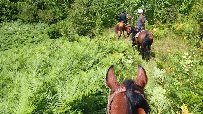 Horseback riding in nature - personal perspective
