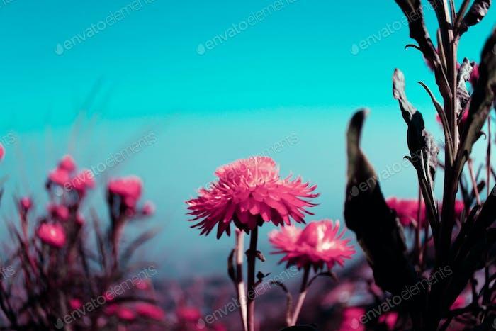 Bloom bloom blooom