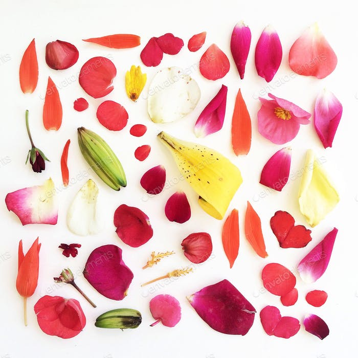 Arrangement pattern of colorful petals on a white background.