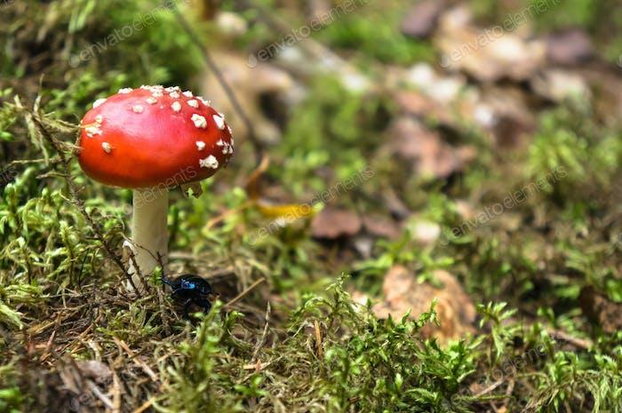 Autumn forest treasures